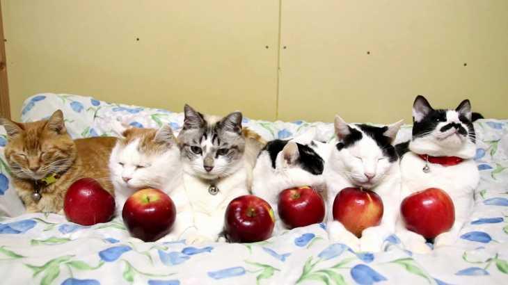 紅玉りんごを乗せた6匹の猫 181213