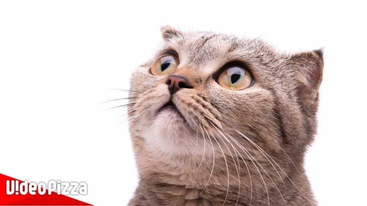 ドッキリされる猫たちの反応が面白すぎるww 【びっくり猫まとめ】